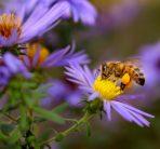 Local honey creates a buzz!