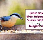 BRITISH GARDEN BIRDS: HELPING BIRDS SURVIVE AND THRIVE
